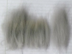 Non-synchronized coat:  The sample on the left shows locks of agouti wool as shorn.  The center sample shows the secondary coat which was pulled from the original sample.  The sample on the right shows the longest coat growth.