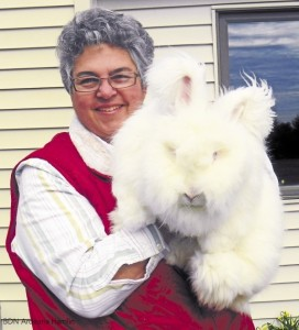 Michaele Bailey, owner of Basketful of Bunnies in Levant, shows off Alberta, one of the German Angora rabbits she raises for the production of fiber.