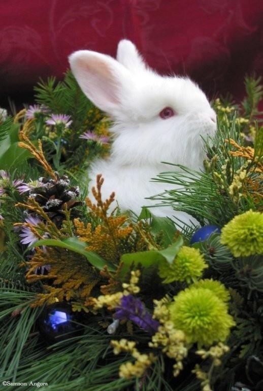 christmas-bunny1 (copy)
